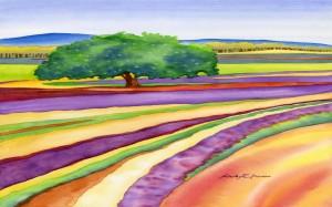 Lavender Field (Beauty of Simplicity)